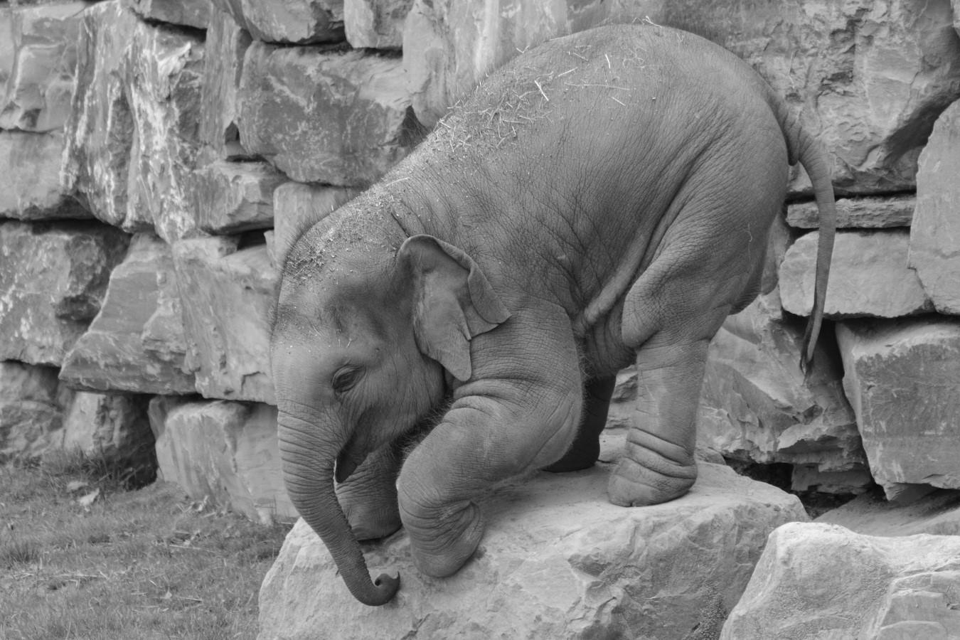 5 razones que hicieron de Dumbo un fracaso en cine